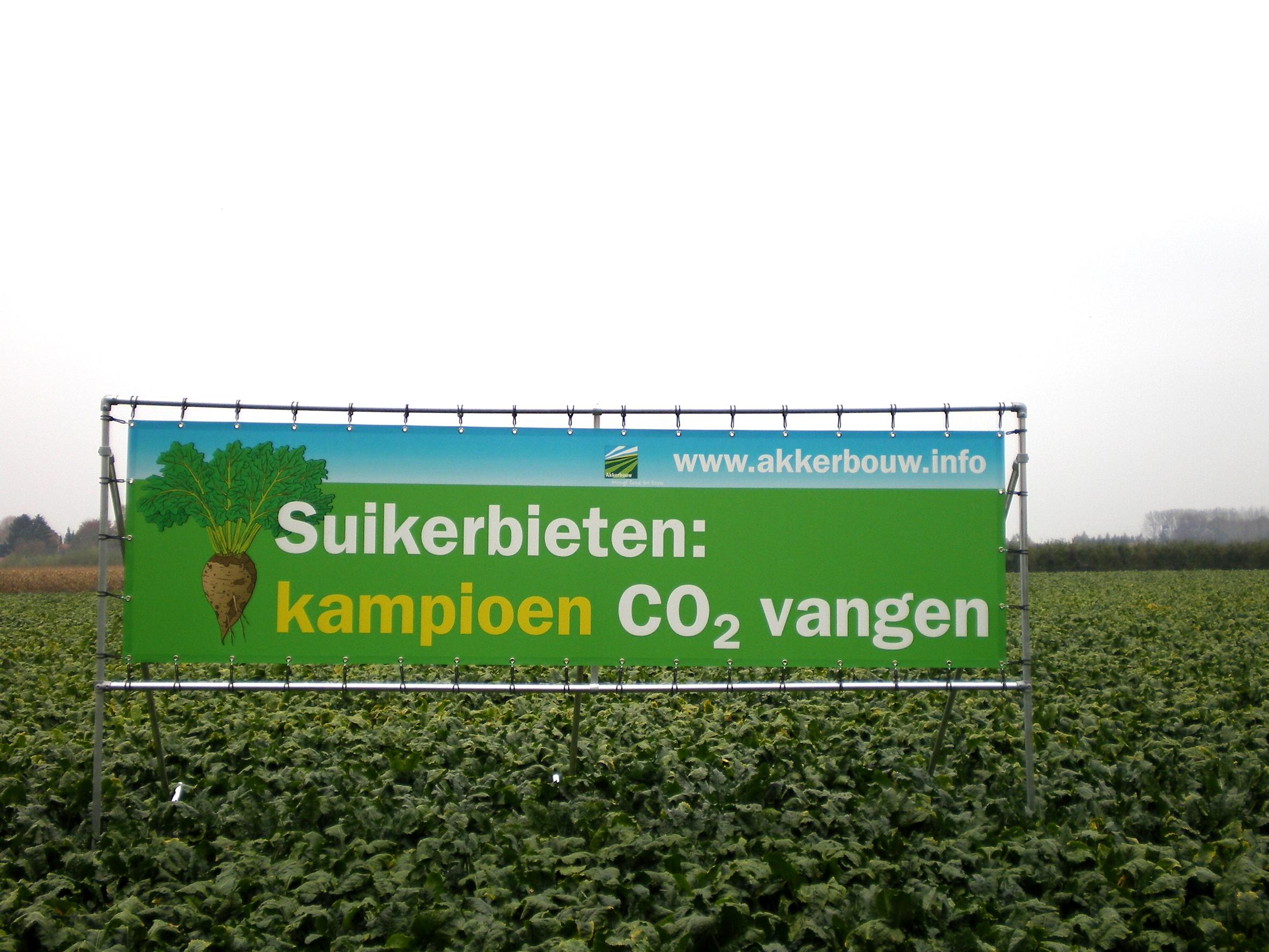 Koolstofdioxide vastleggen: suikerbieten zijn er goed in!