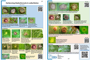 Waarnemen en herkennen bladschimmels