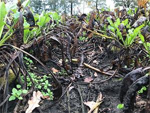 Integrated management of foliar diseases in sugar beet
