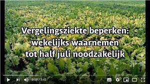 Video 'Vergelingsziekte beperken: wekelijks waarnemen tot half juli noodzakelijk'