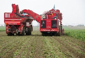 Inzet van overlaadwagens voor transport van bieten in het veld