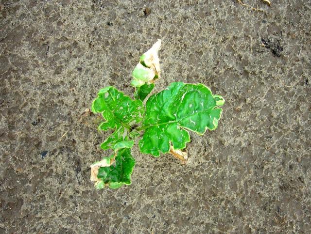 herbicide_neveneffect-100