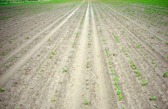 herbicide_neveneffect-101