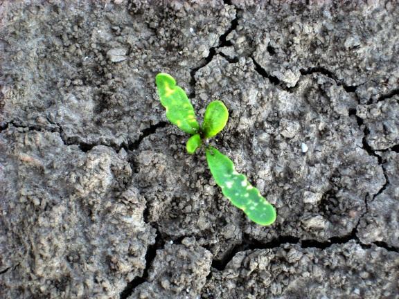 herbicide_neveneffect-81