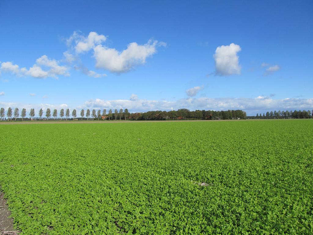 Reduceer bodemplagen door keuze juiste groenbemester