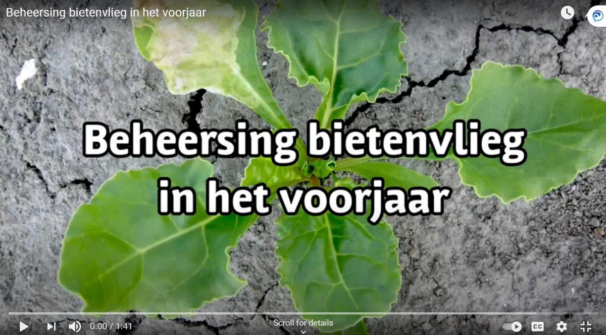 Video 'Beheersing bietenvlieg in het voorjaar'