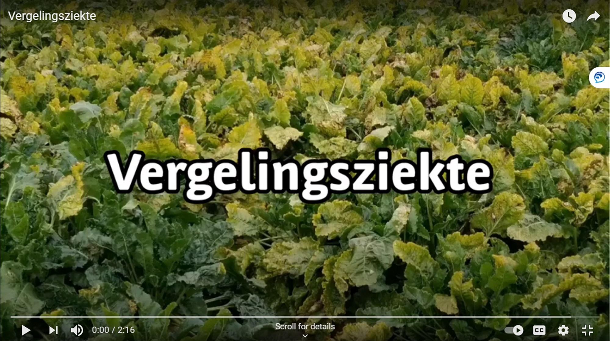 Video 'Vergelingsziekte'
